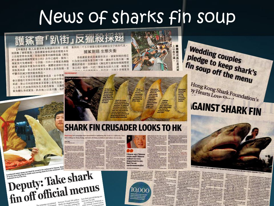 News of sharks fin soup