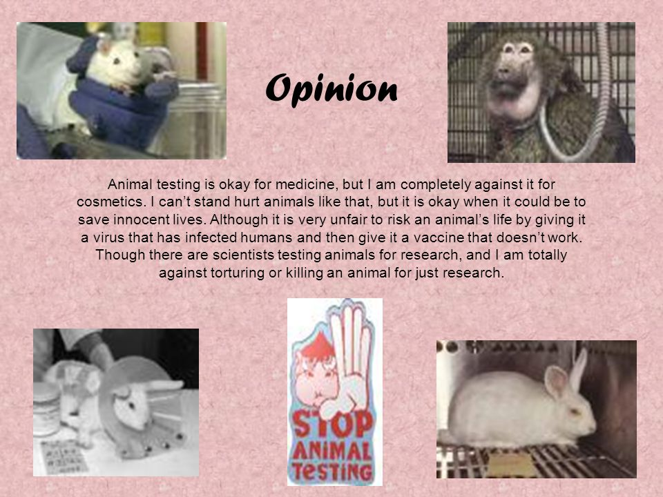 Opinion Animal testing is okay for medicine, but I am completely against it for cosmetics. I can't stand hurt animals like that, but it is okay when i