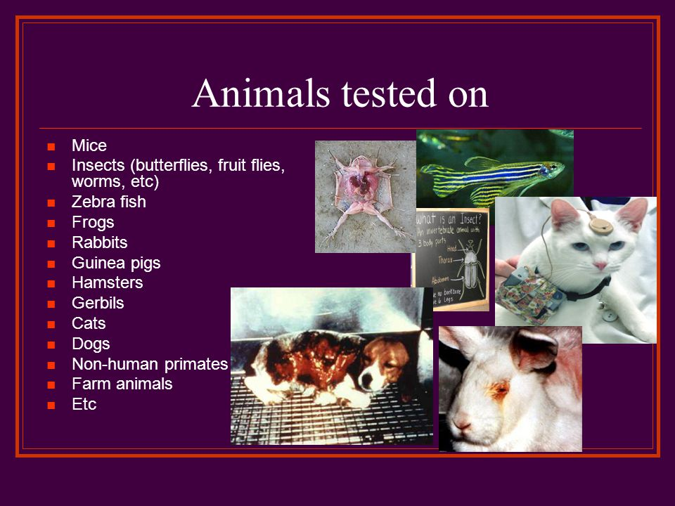 Animals tested on Mice Insects (butterflies, fruit flies, worms, etc) Zebra fish Frogs Rabbits Guinea pigs Hamsters Gerbils Cats Dogs Non-human primates Farm animals Etc