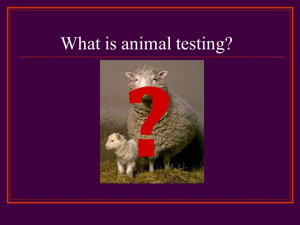 What is animal testing