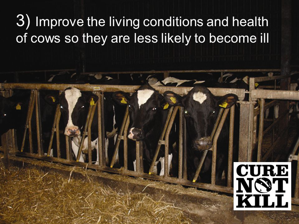 3) Improve the living conditions and health of cows so they are less likely to become ill