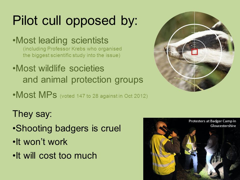Pilot cull opposed by: Most leading scientists (including Professor Krebs who organised the biggest scientific study into the issue) Most wildlife societies and animal protection groups Most MPs (voted 147 to 28 against in Oct 2012) They say: Shooting badgers is cruel It won't work It will cost too much Protesters at Badger Camp in Gloucestershire
