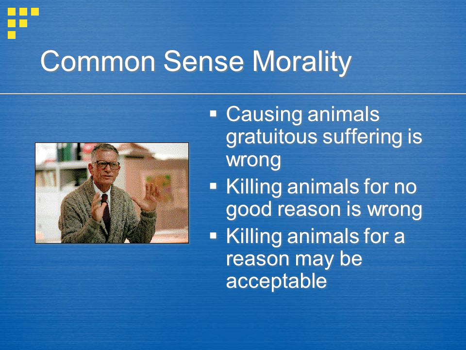 Common Sense Morality  Causing animals gratuitous suffering is wrong  Killing animals for no good reason is wrong  Killing animals for a reason may be acceptable