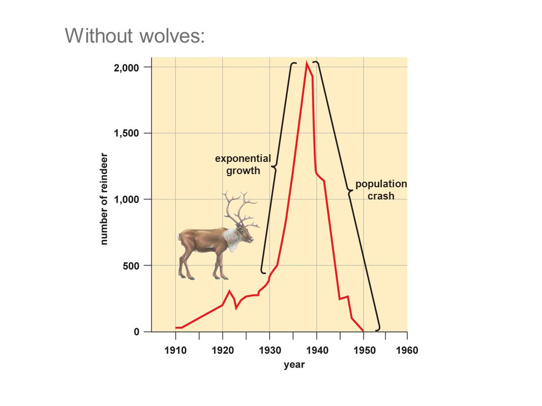 exponential growth population crash Without wolves: