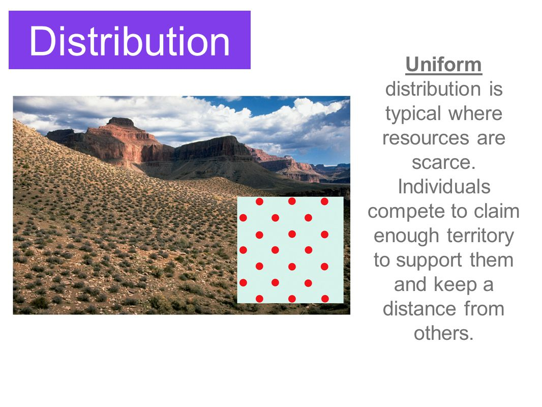 Distribution Uniform distribution is typical where resources are scarce. Individuals compete to claim enough territory to support them and keep a dist