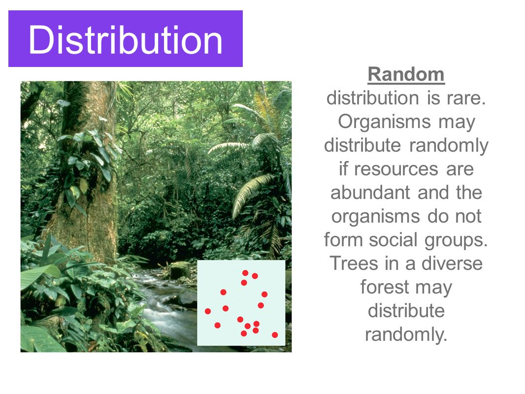 Population Limits Density-dependent factors affect a population more strongly the larger it grows.