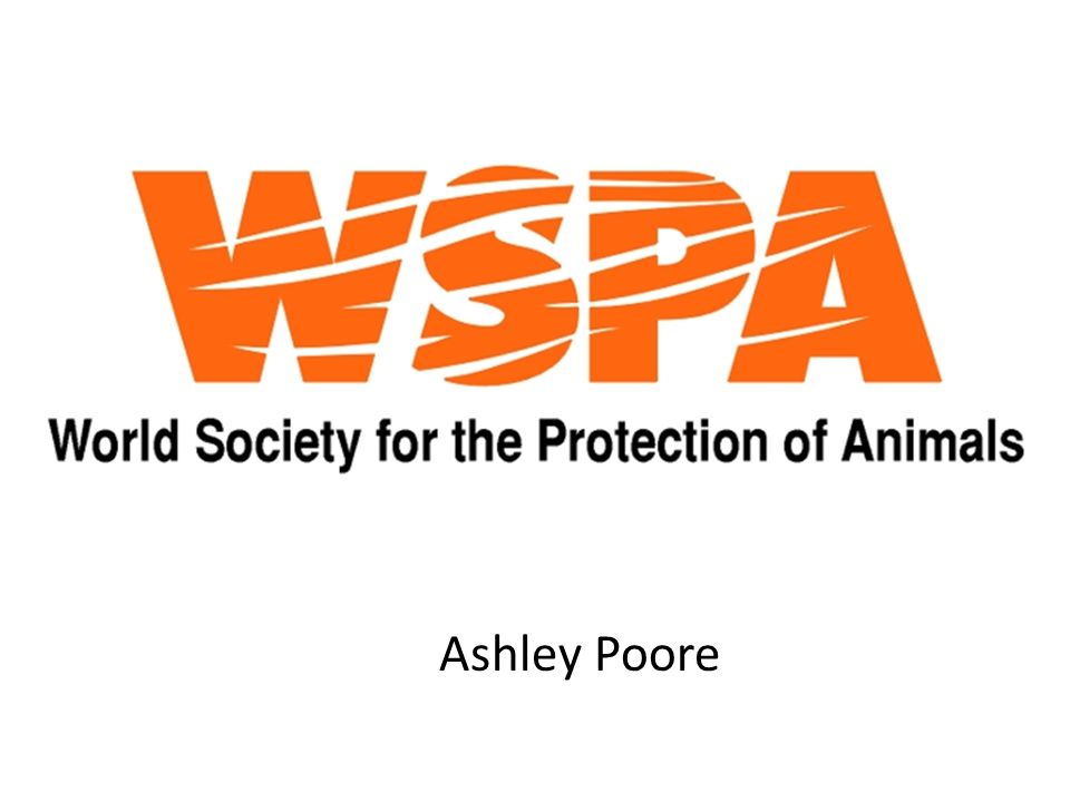 WSPA The World Society for the Protection of Animals (WSPA) is an international animal welfare organization.
