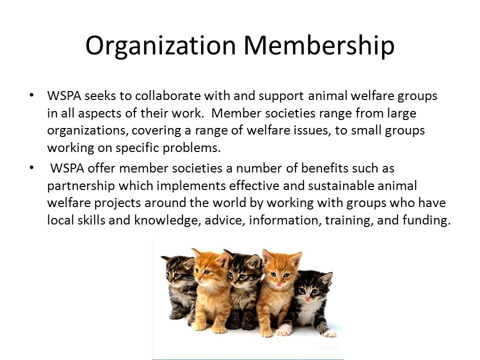 Organization Membership WSPA seeks to collaborate with and support animal welfare groups in all aspects of their work. Member societies range from lar