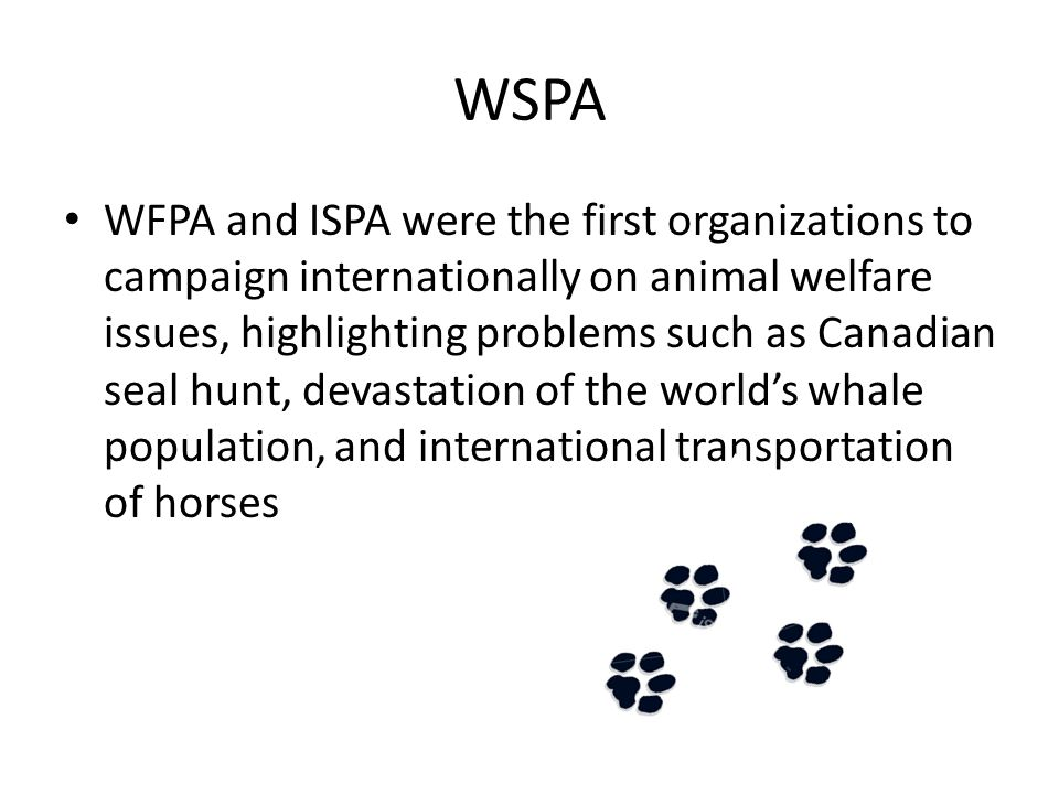 WSPA Help has been provided for animals in a wide range of situations including the Gulf war, the Kosovo conflict, earthquakes in Gujarat, India in 2000 and in El Salvador in 2001, and floods in Honduras and Mozambique during 2000 A key area of WSPA's work has been the introduction of animal welfare principles into regions where they were previously under developed or non-existent.