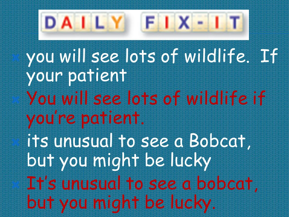  you will see lots of wildlife. If your patient  You will see lots of wildlife if you're patient.  its unusual to see a Bobcat, but you might be lu