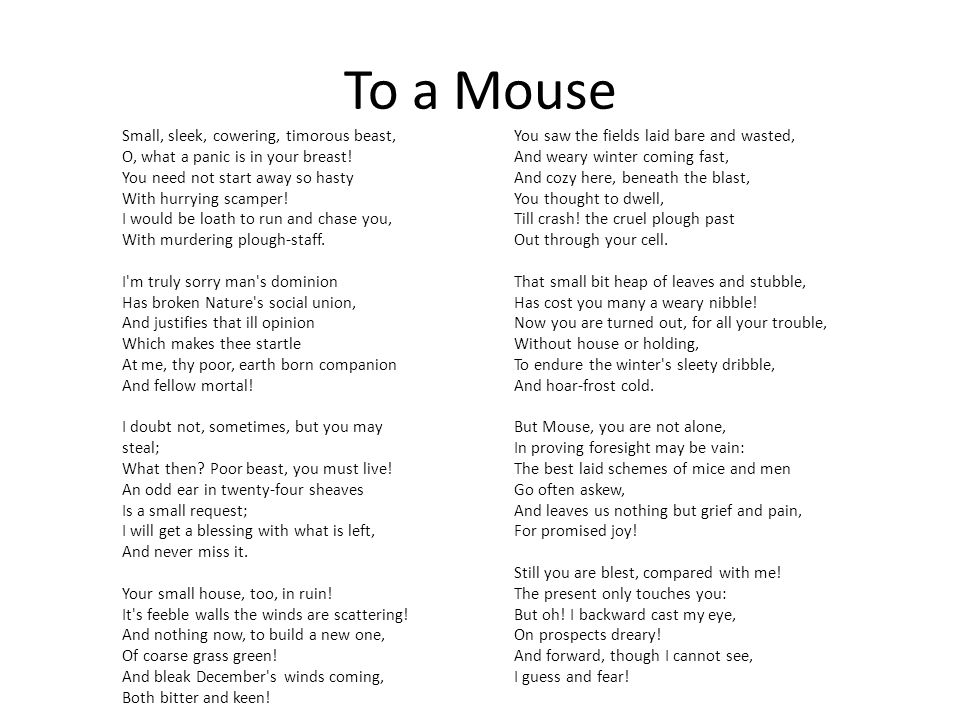 To a Mouse Small, sleek, cowering, timorous beast, O, what a panic is in your breast.