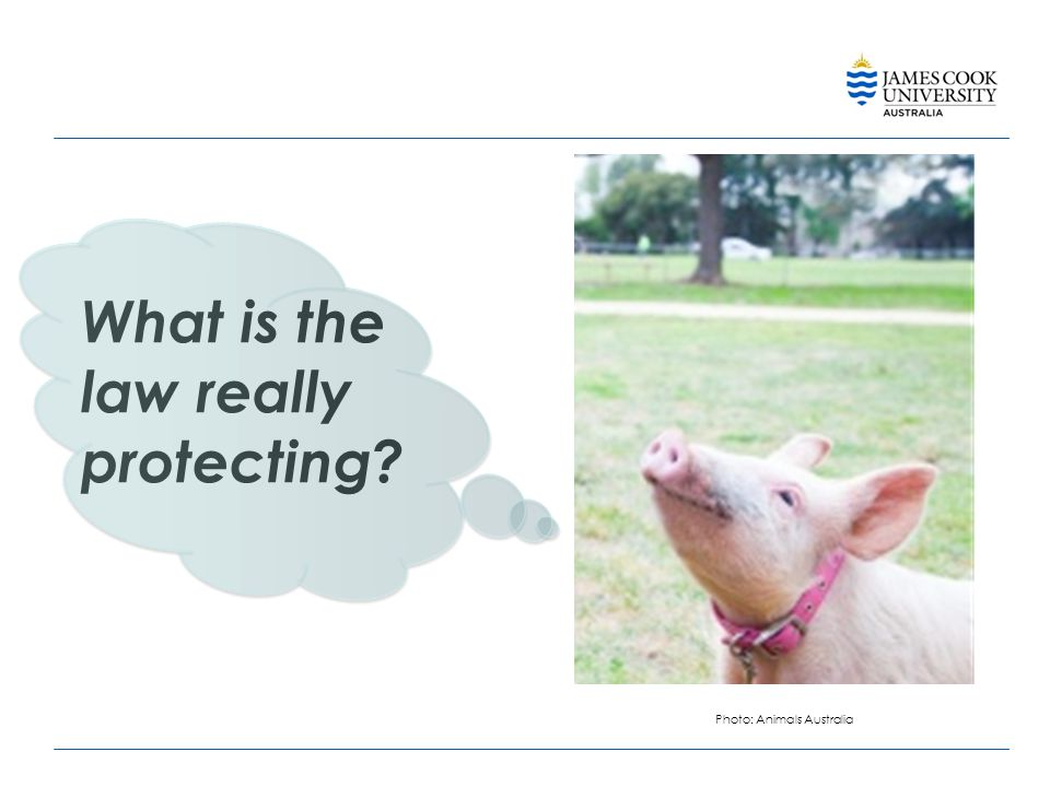 What is the law really protecting Photo: Animals Australia