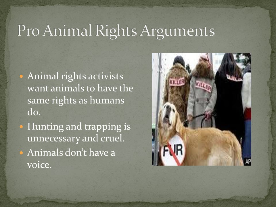 Animal rights activists want animals to have the same rights as humans do.