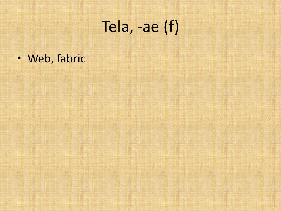 Tela, -ae (f) Web, fabric
