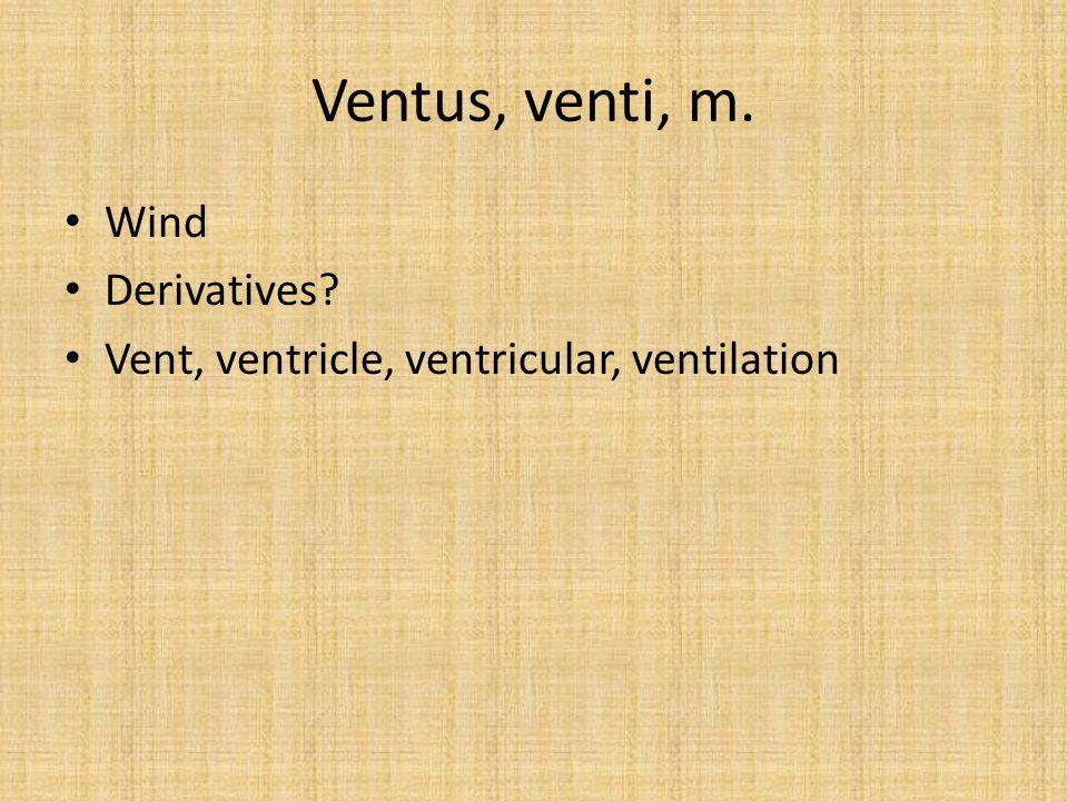 Ventus, venti, m. Wind Derivatives? Vent, ventricle, ventricular, ventilation