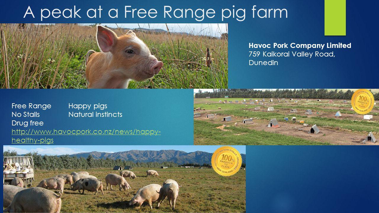 A peak at a Free Range pig farm Havoc Pork Company Limited 759 Kaikorai Valley Road, Dunedin Free RangeHappy pigs No StallsNatural instincts Drug free http://www.havocpork.co.nz/news/happy- healthy-pigs