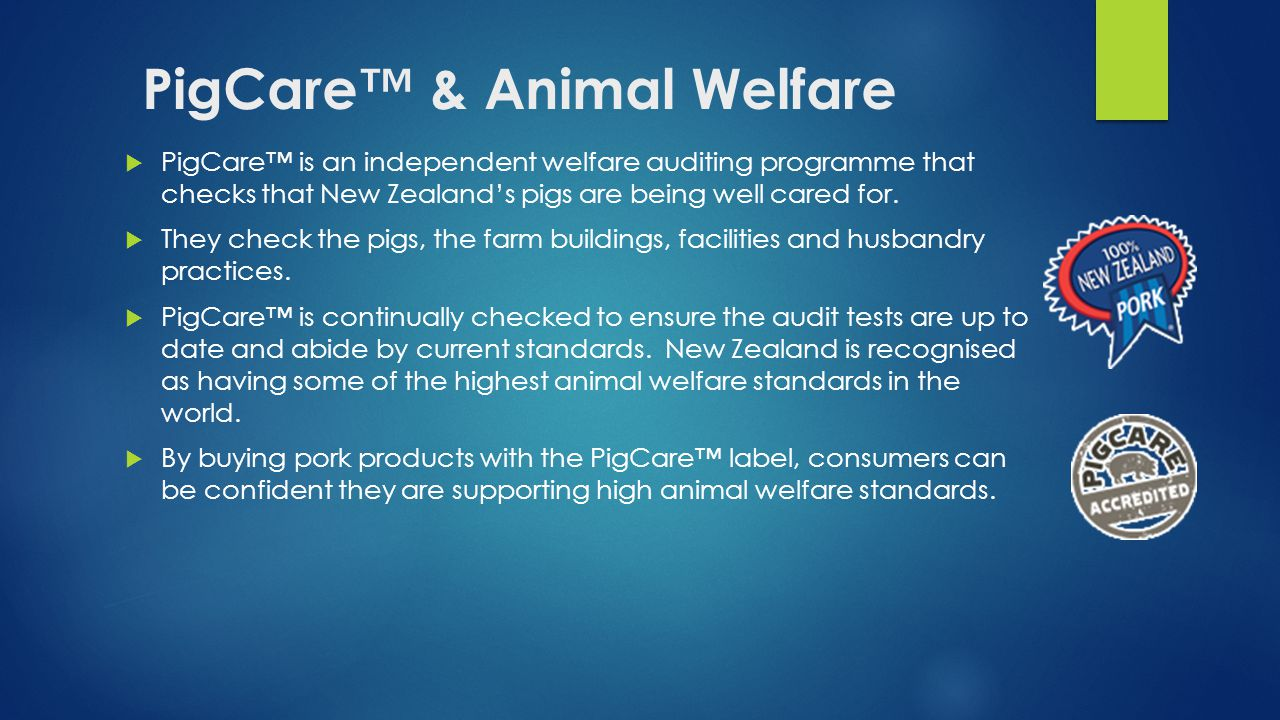 PigCare™ & Animal Welfare  PigCare™ is an independent welfare auditing programme that checks that New Zealand's pigs are being well cared for.
