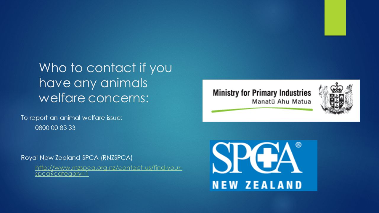 Who to contact if you have any animals welfare concerns: To report an animal welfare issue: 0800 00 83 33 Royal New Zealand SPCA (RNZSPCA) http://www.rnzspca.org.nz/contact-us/find-your- spca category=1