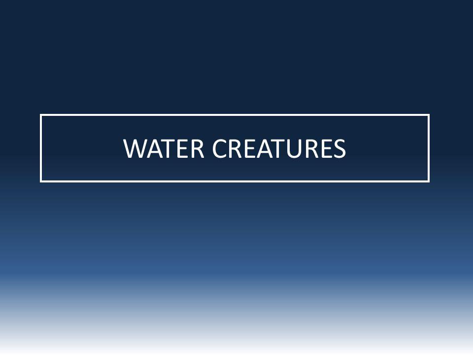 WATER CREATURES