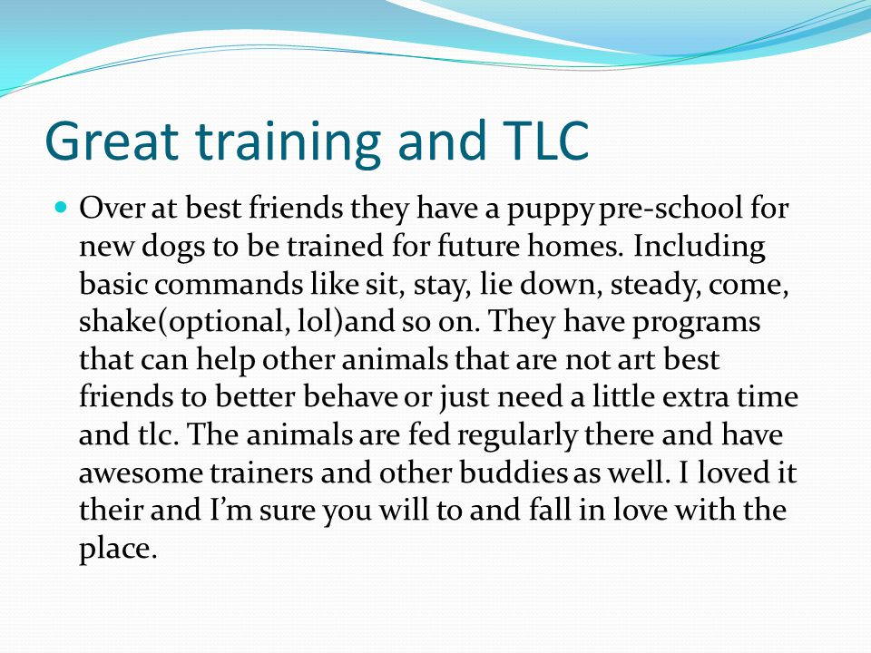 Great training and TLC Over at best friends they have a puppy pre-school for new dogs to be trained for future homes.