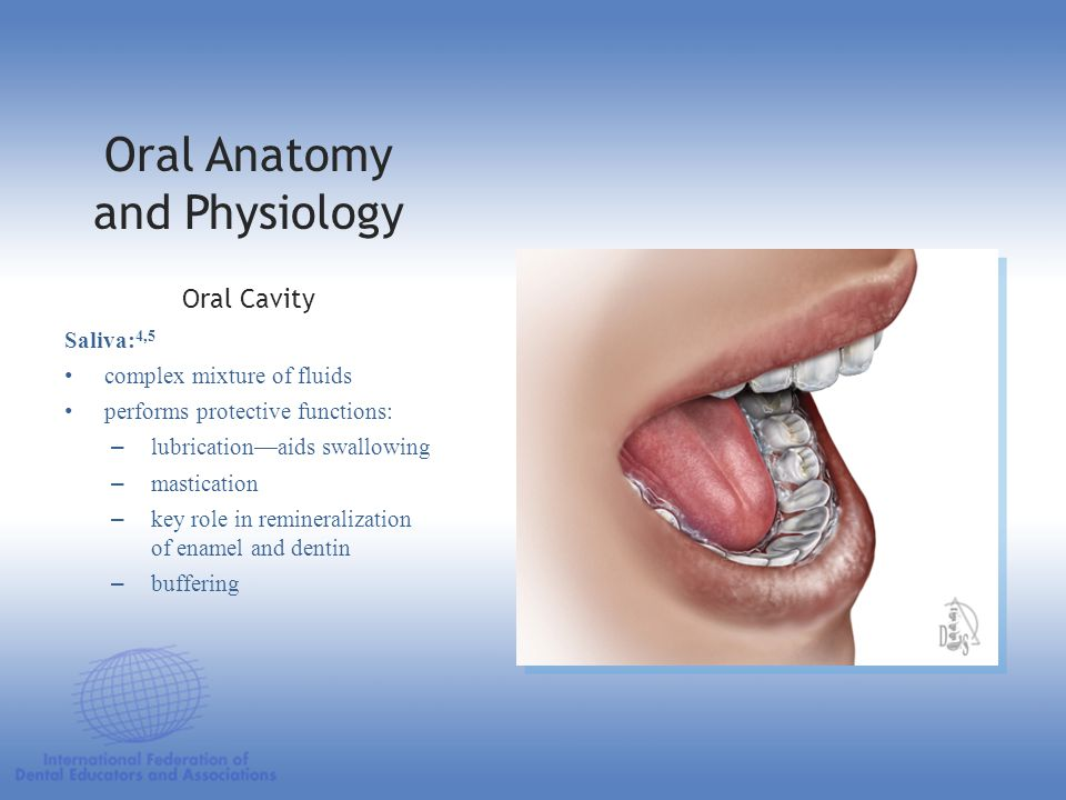 Oral Anatomy and Physiology Saliva: 4,5 complex mixture of fluids performs protective functions: –lubrication—aids swallowing –mastication –key role i