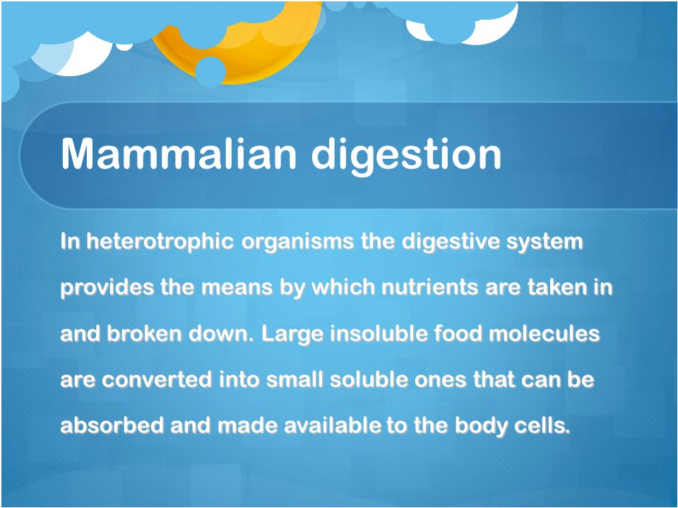 Mammalian digestion In heterotrophic organisms the digestive system provides the means by which nutrients are taken in and broken down. Large insolubl