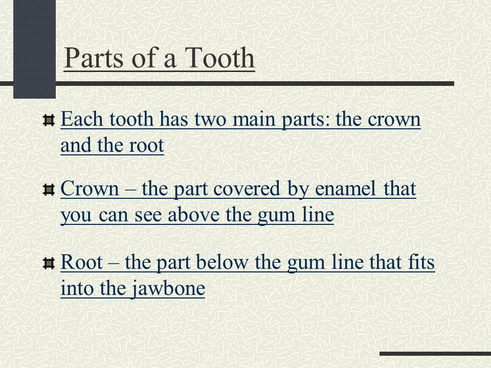 Parts of a Tooth Each tooth has two main parts: the crown and the root Crown – the part covered by enamel that you can see above the gum line Root – the part below the gum line that fits into the jawbone