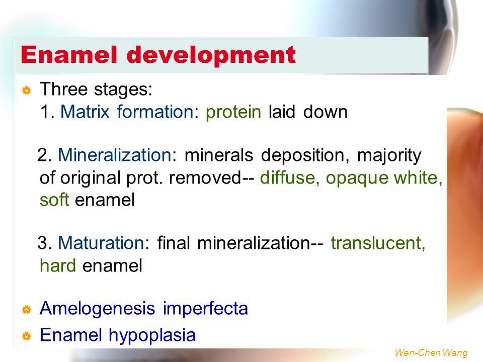 Wen-Chen Wang Enamel development  Three stages: 1. Matrix formation: protein laid down 2. Mineralization: minerals deposition, majority of original p