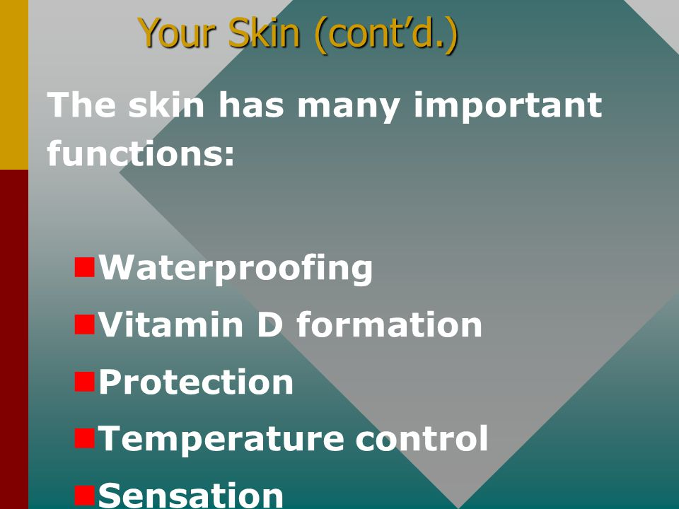 Your Skin (cont'd.) The skin has many important functions: Waterproofing Vitamin D formation Protection Temperature control Sensation