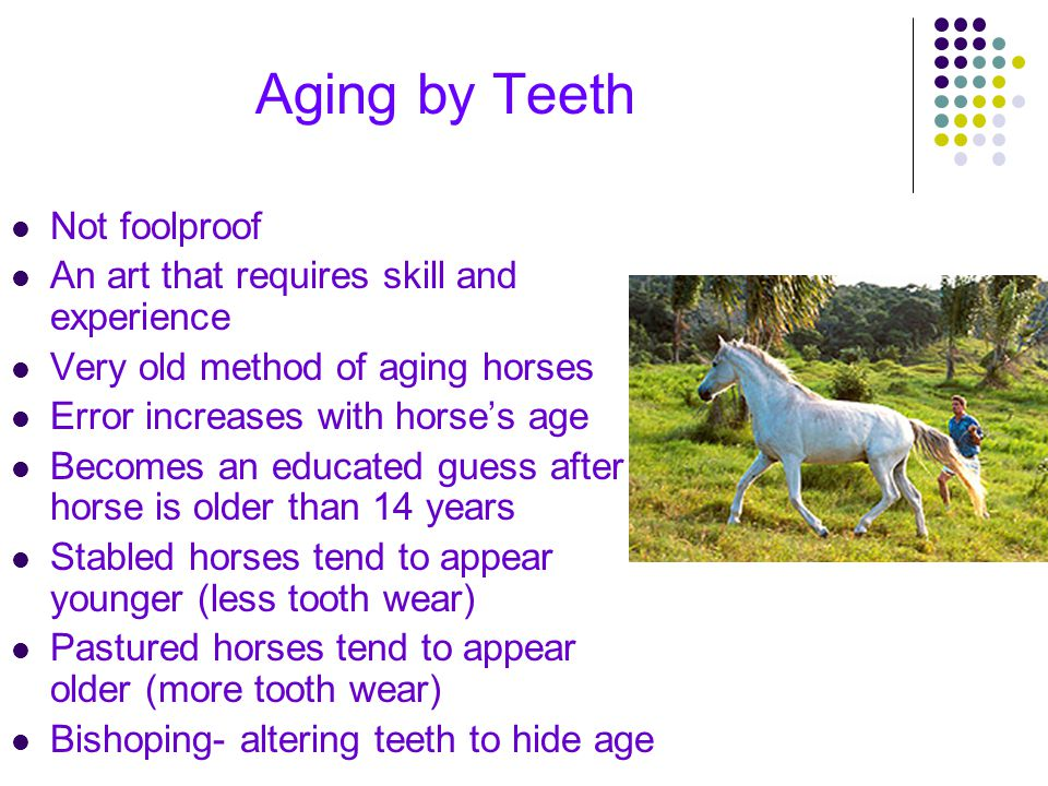 Aging by Teeth Not foolproof An art that requires skill and experience Very old method of aging horses Error increases with horse's age Becomes an edu