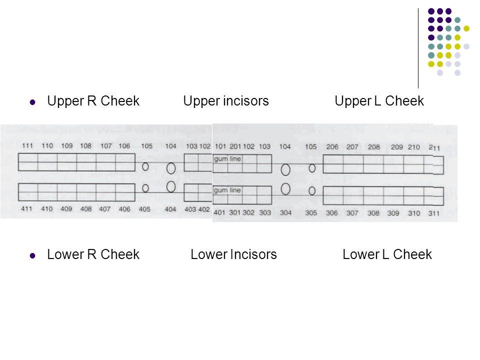 Upper R Cheek Upper incisors Upper L Cheek Lower R Cheek Lower Incisors Lower L Cheek