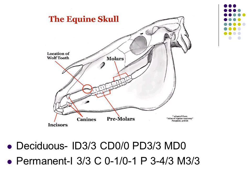 Deciduous- ID3/3 CD0/0 PD3/3 MD0 Permanent-I 3/3 C 0-1/0-1 P 3-4/3 M3/3