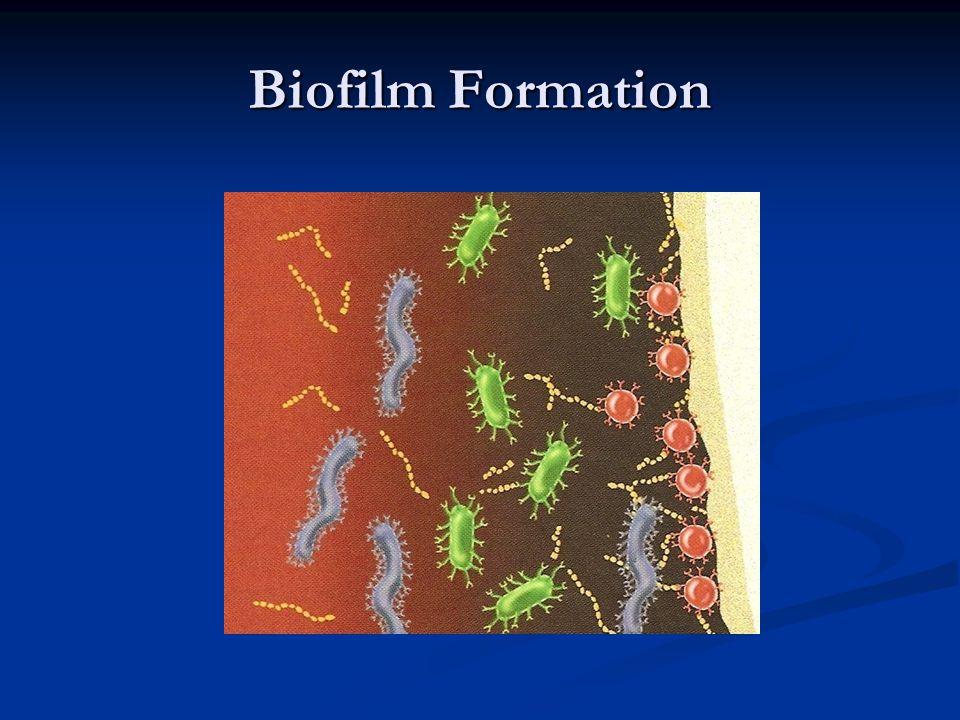 Biofilm Formation