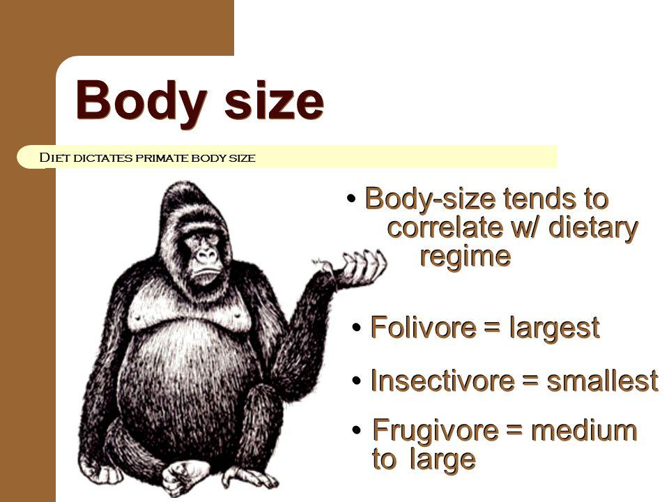 Body size Diet dictates primate body size Body-size tends to correlate w/ dietary regime Body-size tends to correlate w/ dietary regime Folivore = lar