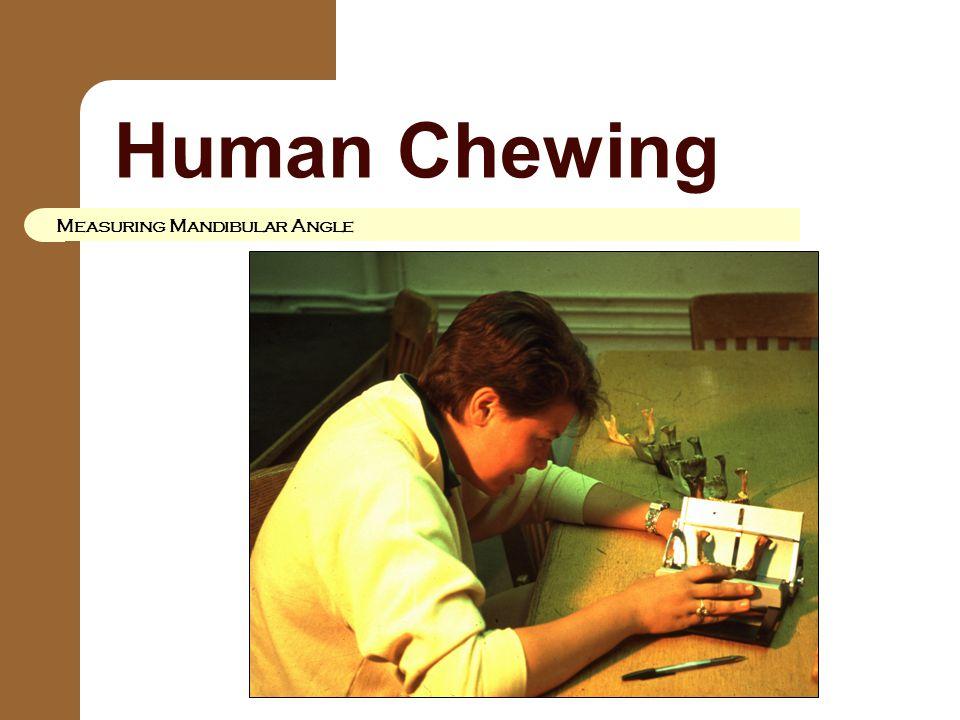 Human Chewing Measuring Mandibular Angle