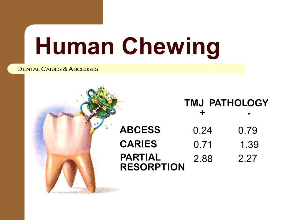 Human Chewing Dental Caries & Abcesses 0.79 ABCESS CARIES TMJ PATHOLOGY + - 0.24 0.71 2.88 1.39 2.27 PARTIAL RESORPTION