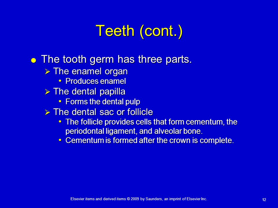 12 Elsevier items and derived items © 2009 by Saunders, an imprint of Elsevier Inc. Teeth (cont.)  The tooth germ has three parts.  The enamel organ