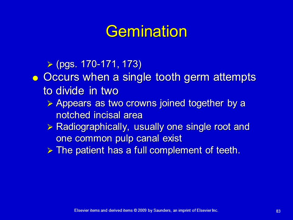 83 Elsevier items and derived items © 2009 by Saunders, an imprint of Elsevier Inc. Gemination  (pgs. 170-171, 173)  Occurs when a single tooth germ