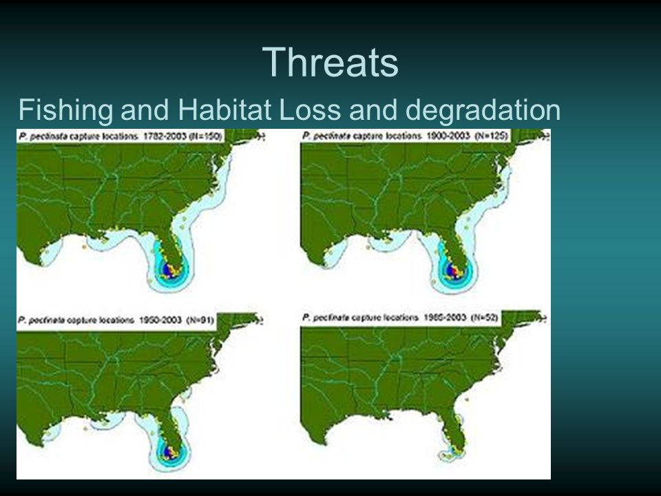 Threats Fishing and Habitat Loss and degradation
