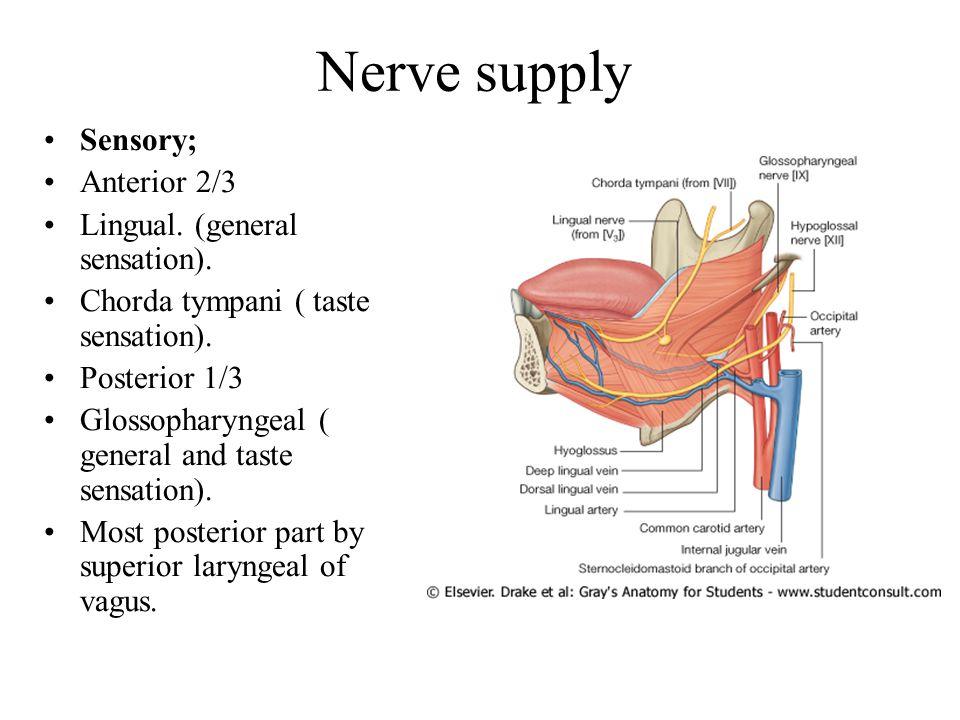 Nerve supply Sensory; Anterior 2/3 Lingual.(general sensation).
