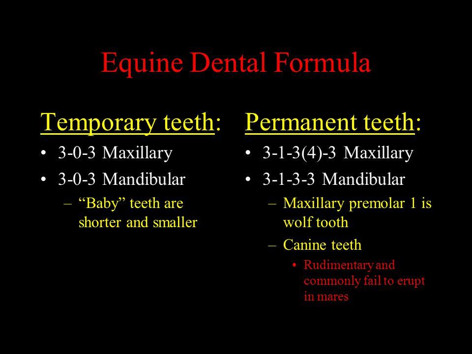 "Equine Dental Formula Temporary teeth: 3-0-3 Maxillary 3-0-3 Mandibular –""Baby"" teeth are shorter and smaller Permanent teeth: 3-1-3(4)-3 Maxillary 3-"