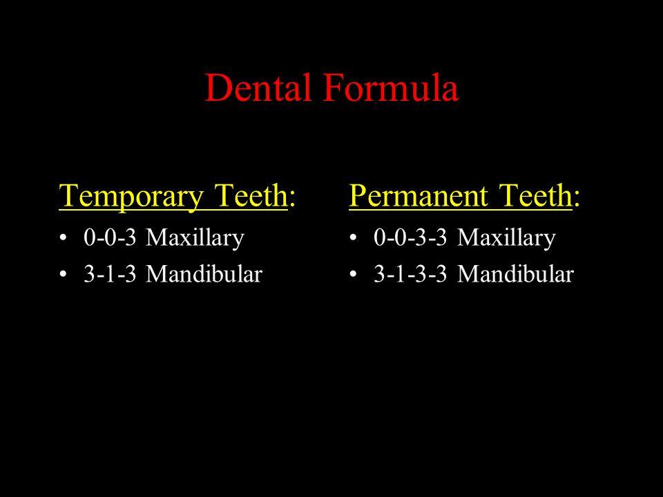 Dental Formula Temporary Teeth: 0-0-3 Maxillary 3-1-3 Mandibular Permanent Teeth: 0-0-3-3 Maxillary 3-1-3-3 Mandibular