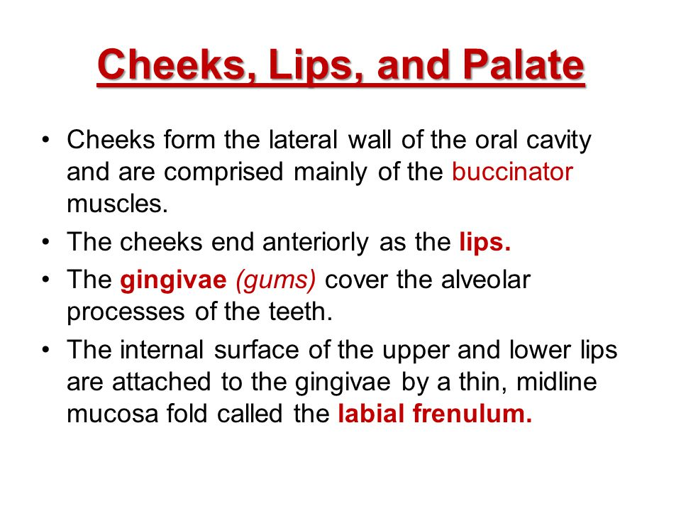 Cheeks, Lips, and Palate Cheeks form the lateral wall of the oral cavity and are comprised mainly of the buccinator muscles. The cheeks end anteriorly