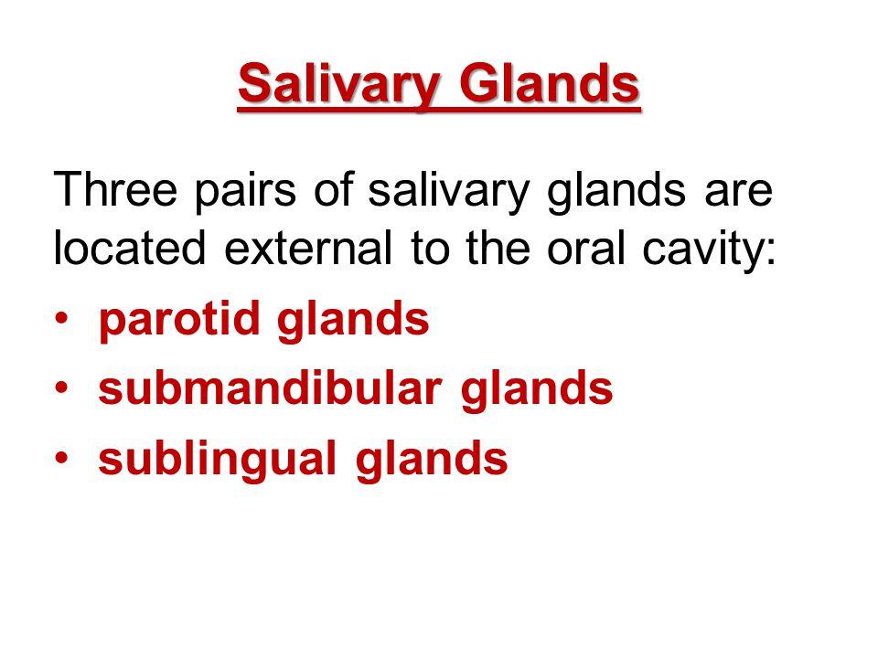 Salivary Glands Three pairs of salivary glands are located external to the oral cavity: parotid glands submandibular glands sublingual glands