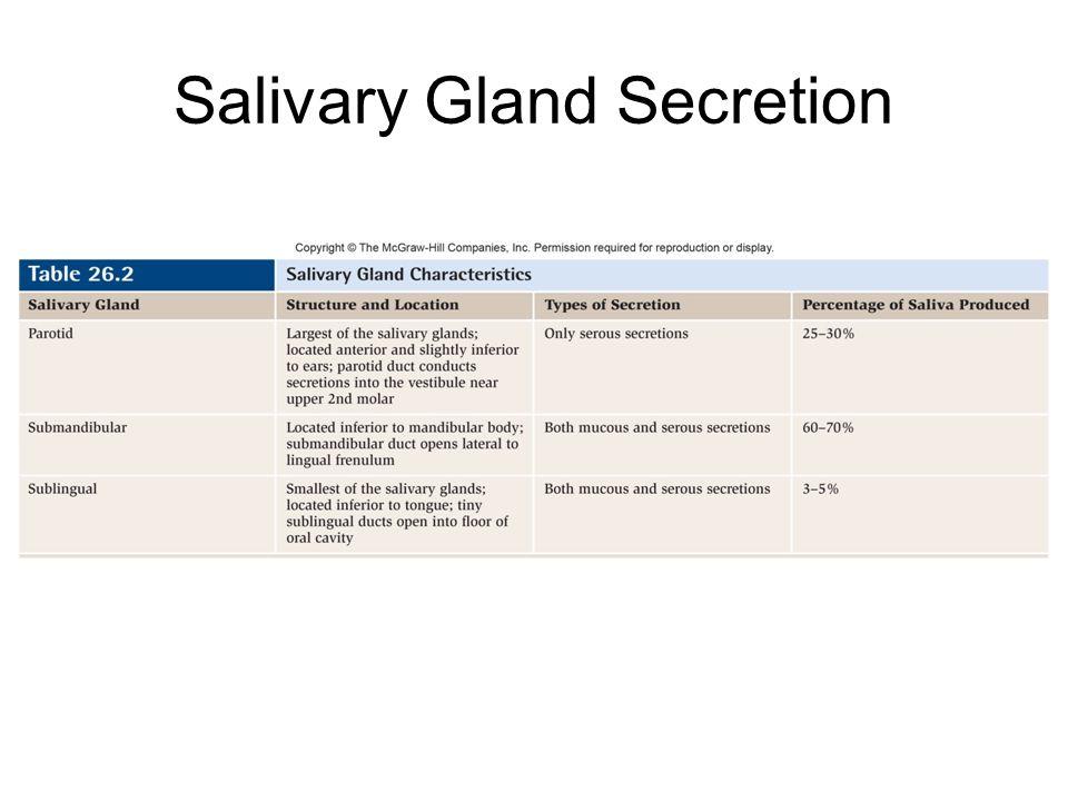 Salivary Gland Secretion