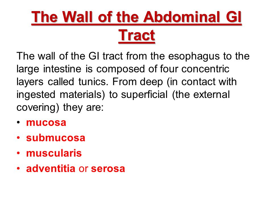 The Wall of the Abdominal GI Tract The wall of the GI tract from the esophagus to the large intestine is composed of four concentric layers called tun