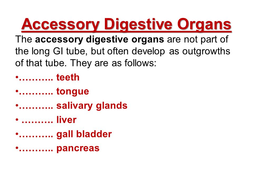 Accessory Digestive Organs The accessory digestive organs are not part of the long GI tube, but often develop as outgrowths of that tube. They are as