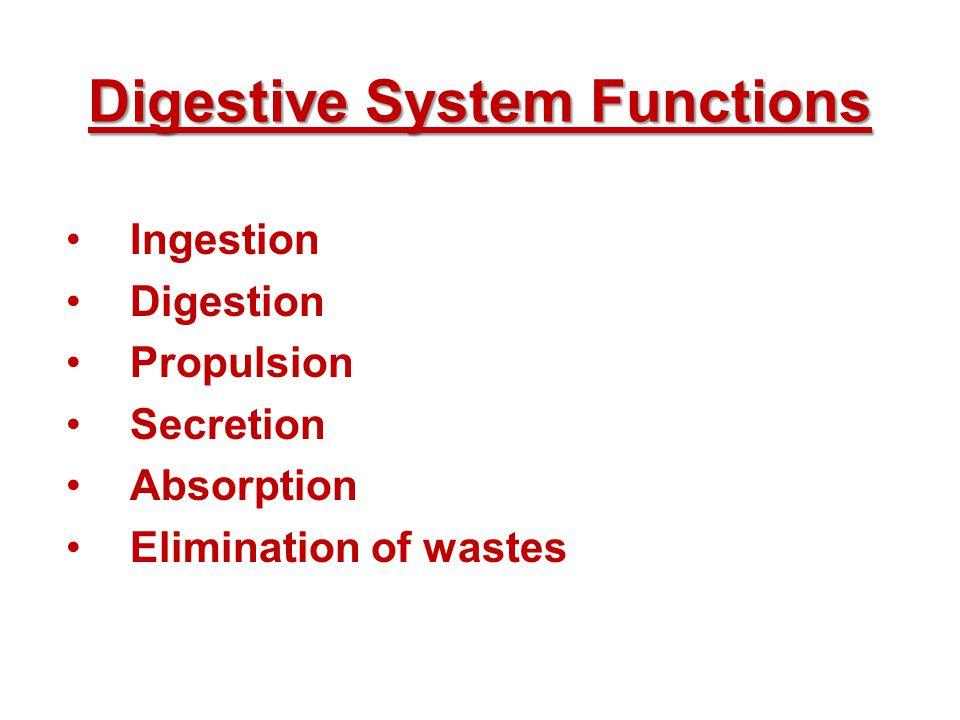 Digestive System Functions Ingestion Digestion Propulsion Secretion Absorption Elimination of wastes