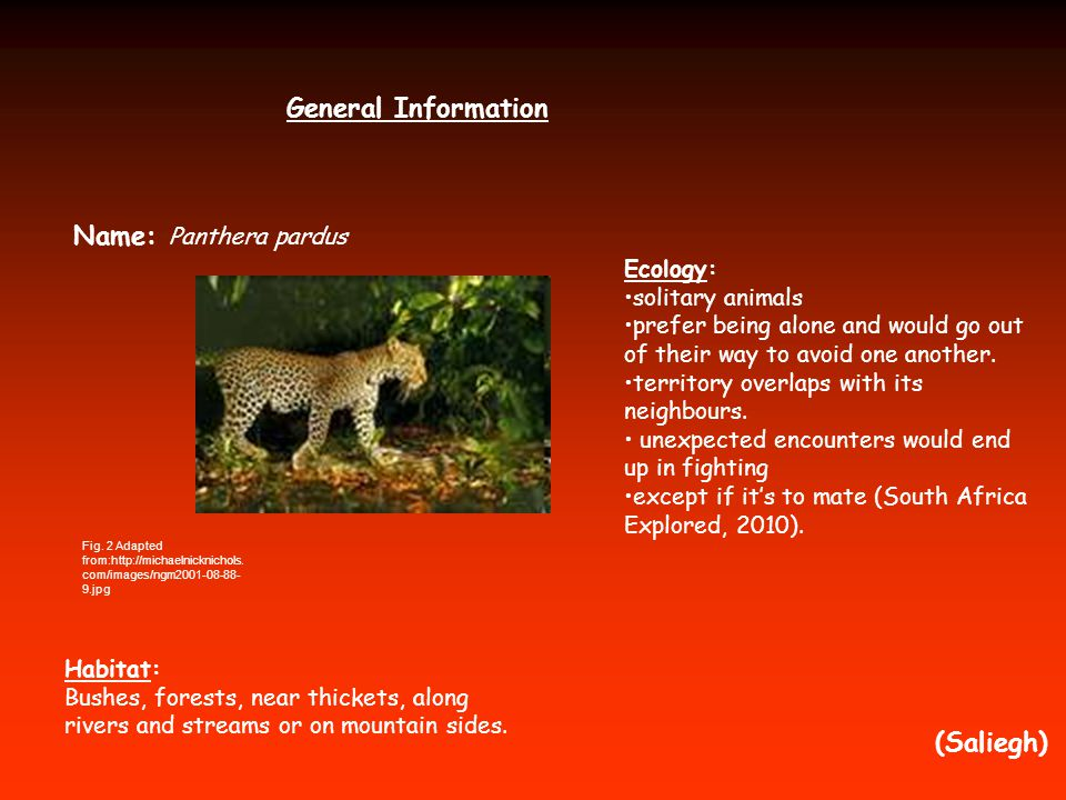 General Information Name: Panthera pardus (Saliegh) Habitat: Bushes, forests, near thickets, along rivers and streams or on mountain sides. Ecology: s