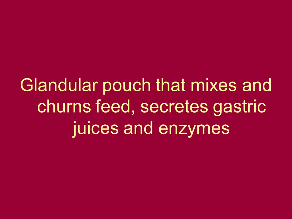 Glandular pouch that mixes and churns feed, secretes gastric juices and enzymes